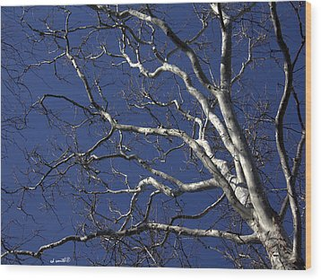 The Family Tree Wood Print by Ed Smith