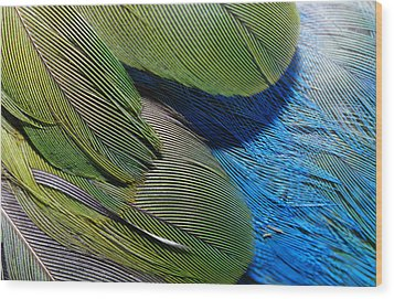 The Feathers Of A Red-winged Parrot Wood Print by Jason Edwards
