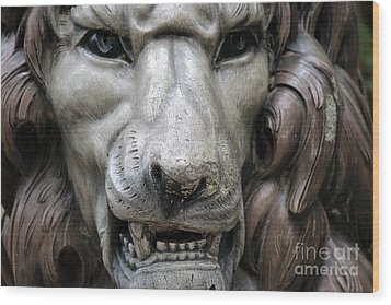 Wood Print featuring the photograph The Fierce Lion  by Kathy  White