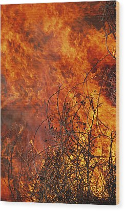 The Flames Of A Controlled Fire Wood Print by Joel Sartore
