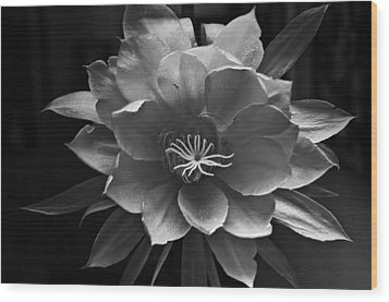 The Flower Of One Night Wood Print by Tom Bell