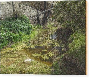 The Frog Pond Wood Print by Cindy Nunn
