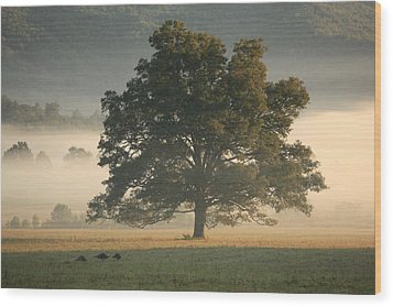 Wood Print featuring the photograph The Giving Tree by Doug McPherson
