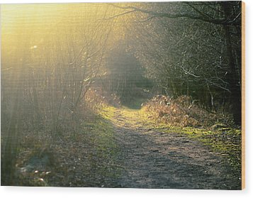 The Glowing Path Wood Print by Justin Albrecht