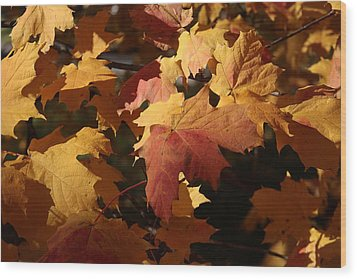 The Golden Days Of October Wood Print by Lyle Hatch