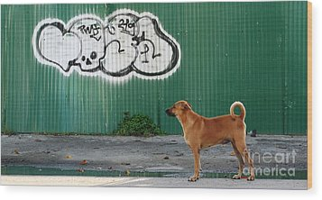 Wood Print featuring the photograph The Graffiti Artist by Nola Lee Kelsey