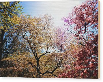 The Grandest Of Dreams - Cherry Blossoms - Brooklyn Botanic Garden Wood Print by Vivienne Gucwa