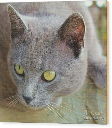 Wood Print featuring the photograph The Gray Cat by Laurinda Bowling
