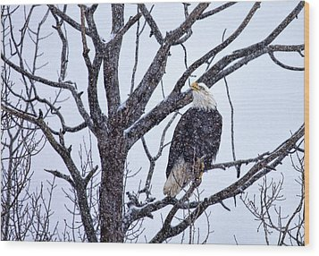 The Great American Bald Eagle Wood Print by Gary Smith