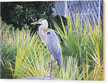 The Great Blue Heron Wood Print by Marilyn Holkham