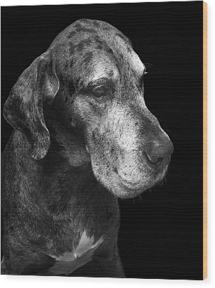 The Great Dane Wood Print by Marc Huebner