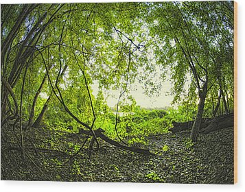 The Green Knoll Wood Print by Kimberleigh Ladd