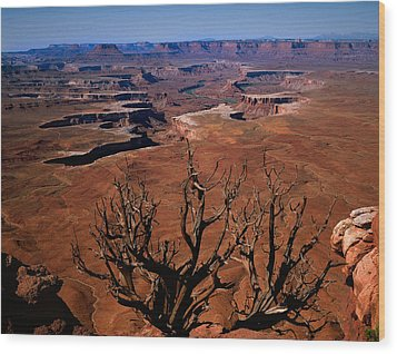 The Green River Over Look Canyonland National Park Wood Print by Daniel Chui