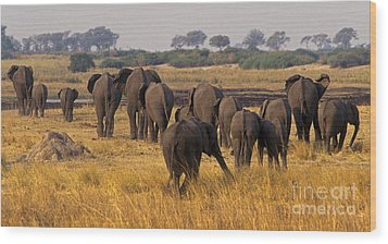 Wood Print featuring the photograph The Herd - Chobe Np Botswana by Craig Lovell
