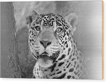 The Jaguar Spots You Wood Print