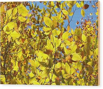 The Joy Of Autumn Wood Print by Robin Regan