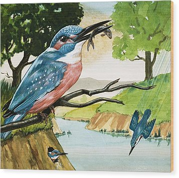 The Kingfisher Wood Print by D A Forrest