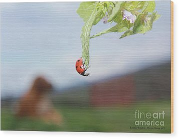 Wood Print featuring the photograph The Lady Bug No.1 by Laurinda Bowling