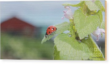 Wood Print featuring the photograph The Lady Bug  No.2 by Laurinda Bowling