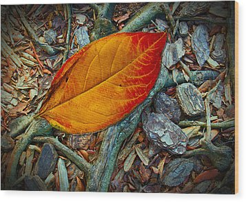 The Last Leaf Wood Print by Barbara Middleton