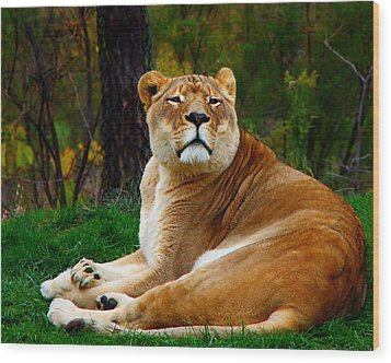 The Lioness Wood Print by Davandra Cribbie
