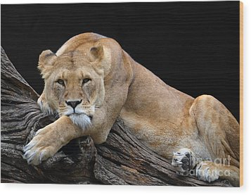 The Lioness Is Watching You Wood Print by Eva Kaufman