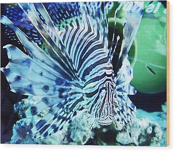 The Lionfish 1 Wood Print by Robin Hewitt