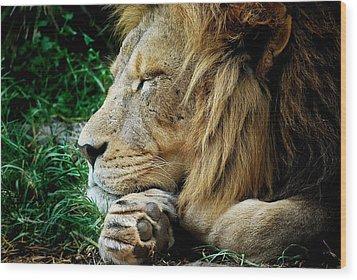 The Lions Sleeps Wood Print