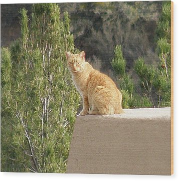 The Lookout Wood Print by FeVa  Fotos