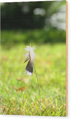 Wood Print featuring the photograph The Lost Feather by JM Photography
