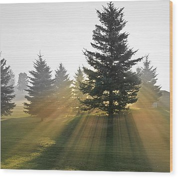 Wood Print featuring the photograph The Magic Of The Morning Light by Nick Mares