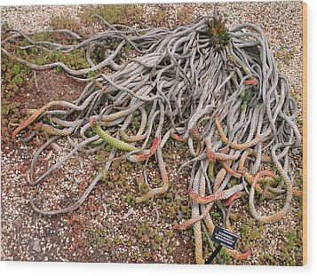 The Medusas Wigs Wood Print by Hiroko Sakai