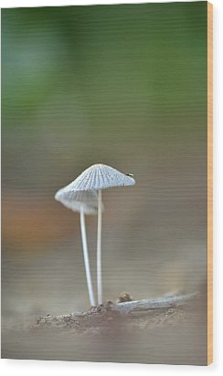 Wood Print featuring the photograph The Mushrooms by JD Grimes
