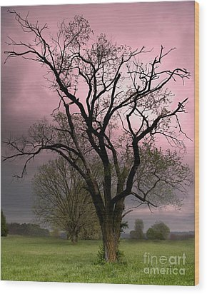 The Old Tree Wood Print by Brian Stamm