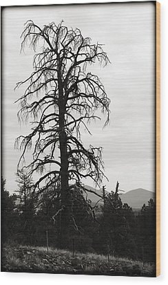 The Old Tree Wood Print by Ricky Barnard