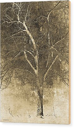 The Orchard Way Wood Print by Ron Jones