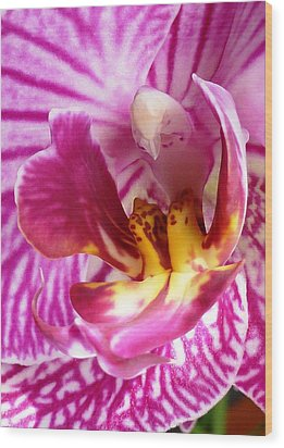 The Orchid Bird Wood Print by AmaS Art