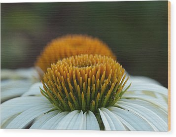 Wood Print featuring the photograph The Pair Of Coneflowers by Monte Stevens