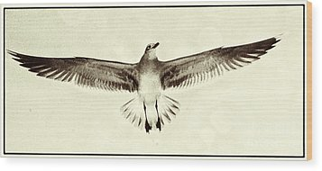 The Perfect Wing Wood Print by Jim Moore