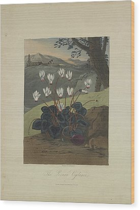 The Persian Cyclamen Wood Print by Robert John Thornton
