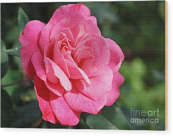 Wood Print featuring the photograph The Pink Rose by Fotosas Photography
