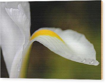 The Pose White Dutch Iris Flower  Wood Print by Jennie Marie Schell