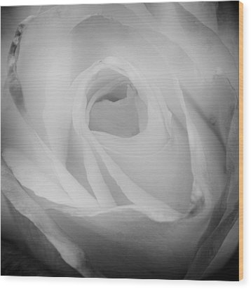 The Princess Diana Rose IIi Wood Print by David Patterson