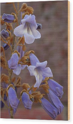 Wood Print featuring the photograph The Princess Flower by Paul Mashburn