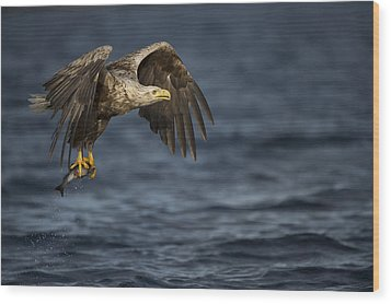 The Prize Wood Print by Andy Astbury