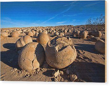 The Pumpkin Patch Wood Print by Peter Tellone
