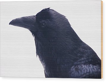 The Raven.  A Study In Black And White Wood Print by Michael Courtney