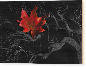 Wood Print featuring the photograph The Red Leaf by Beverly Cash