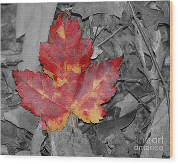 The Red Leaf Wood Print by Paul Ward