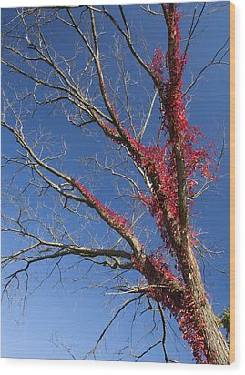 Wood Print featuring the photograph The Red Tree by Nick Mares